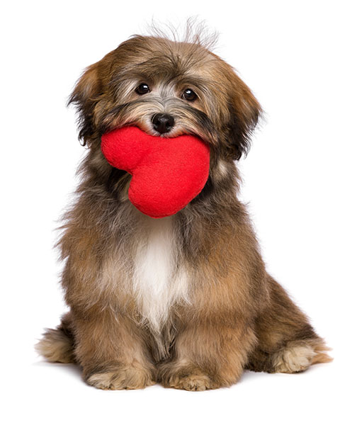 floofy dog with heart