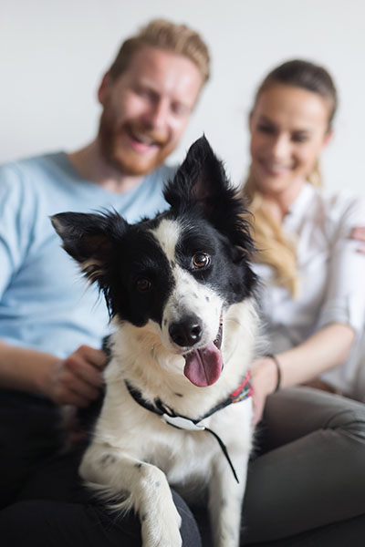 woman and man with collie on couch